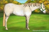 Horse Color:Gold Champagne Roan Pearl Dun Splash Frame