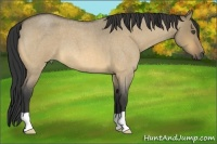 Horse Color:Buckskin Roan Dun