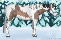 Horse Color:Bay Roan Splash Tobiano Rabicano