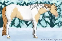 Horse Color:Gold Champagne Dun Tobiano