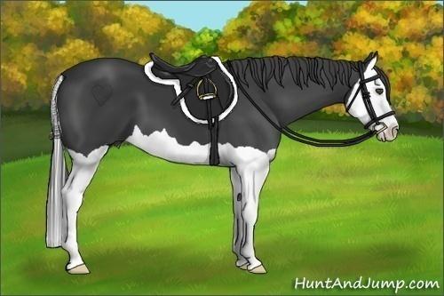 Horse Color:Smokey Black Splash