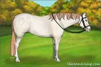 Horse Color:Amber Cream Champagne Pearl Dun Splash
