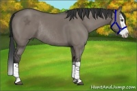 Horse Color:Grullo Splash Rabicano