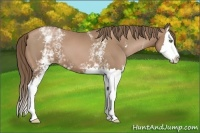 Horse Color:White Spotted Black Pearl Splash
