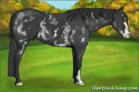Horse Color:White Spotted Black Frame