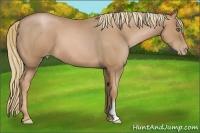 Horse Color:Chestnut Pearl Frame