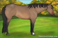 Horse Color:Bay Dun