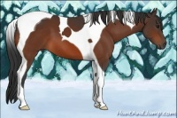 Horse Color:Bay Tobiano