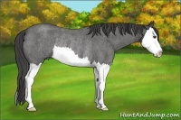 Horse Color:Smokey Blue Roan Splash Rabicano