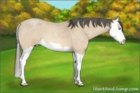 Horse Color:Amber Cream Champagne Roan Splash