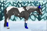 Horse Color:White Spotted Smokey Black Tobiano