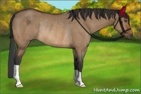 Horse Color:Bay Dun Rabicano