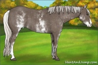Horse Color:White Spotted Silver Black Frame
