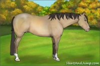 Horse Color:Amber Cream Champagne