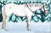 Horse Color:Gold Champagne Roan Dun Splash Tobiano Frame Appaloosa Rabicano