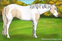 Horse Color:Gold Champagne Pearl Splash Tobiano Rabicano