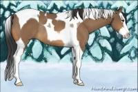 Horse Color:Buckskin Splash Tobiano Rabicano