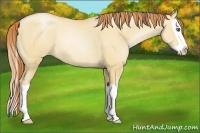 Horse Color:Amber Champagne Pearl Dun Splash Rabicano