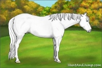 Horse Color:White Spotted Gray Roan Splash Tobiano Appaloosa  Brindle