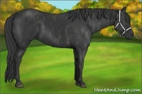 Horse Color:Black Rabicano  Brindle