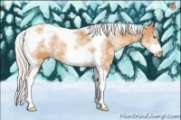 Horse Color:White Spotted Silver Amber Champagne Splash Tobiano Frame