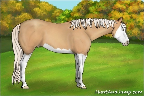 Horse Color:Silver Amber Champagne Splash