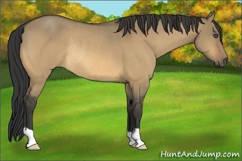 Horse Color:Buckskin Dun Rabicano