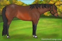Horse Color:Bay