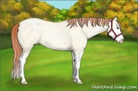 Horse Color:Amber Cream Champagne Pearl Dun Splash