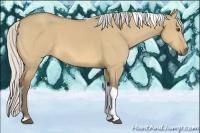 Horse Color:Silver Buckskin Dun Tobiano