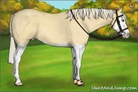 Horse Color:Gold Cream Champagne Dun Splash