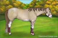 Horse Color:Grullo Pearl Splash Frame