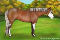 Horse Color:Silver Bay Splash Frame Rabicano