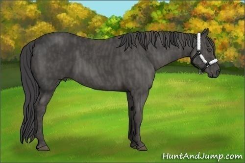 Horse Color:Smokey Black  Brindle