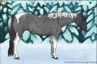 Horse Color:Smokey Blue Roan Tobiano