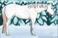 Horse Color:Classic Cream Champagne Roan Dun Splash Tobiano Frame Appaloosa