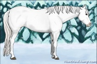 Horse Color:White Spotted Silver Grullo Splash Tobiano Appaloosa