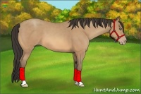 Horse Color:Amber Champagne