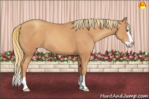 Horse Color:Gold Champagne Splash