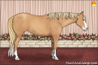Horse Color:Gold Champagne Splash