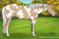 Horse Color:White Spotted Silver Classic Champagne