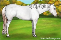 Horse Color:Chestnut Appaloosa