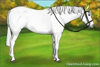 Horse Color:Gray Roan