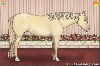 Horse Color:Gold Champagne Roan Dun