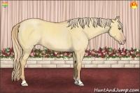 Horse Color:Gold Champagne Roan Dun