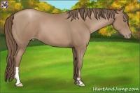 Horse Color:Black Pearl Frame