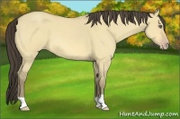 Horse Color:Amber Cream Champagne Roan Dun