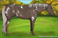 Horse Color:White Spotted Silver Black