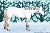Horse Color:Amber Champagne Splash Tobiano Frame Appaloosa Rabicano