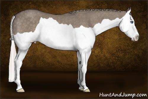 Horse Color:Silver Grullo Splash Rabicano